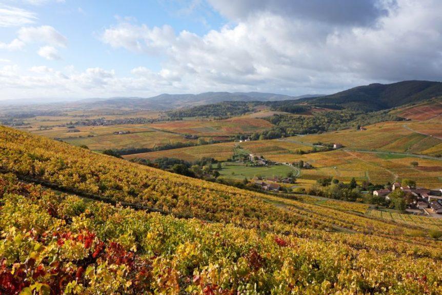 Photo vignes beaujolais