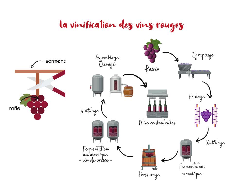 couleurs vin